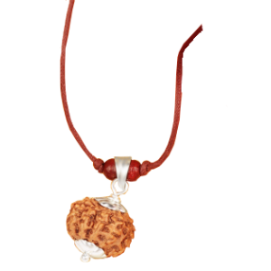 11 Mukhi Rudraksha Java Silver Capped Pendant in Thread 12mm