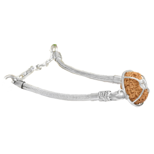 17 Mukhi Rudraksha Java/Indonesia Silver Bracelet with Snake Chain Small 14mm