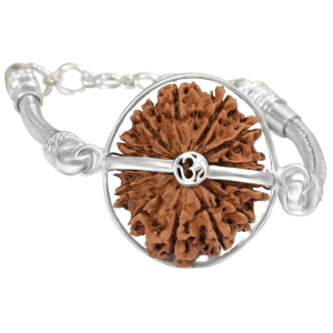 13 Mukhi Rudraksha Nepal  Silver Bracelet in Silver Snake Chain Small 20mm-24mm
