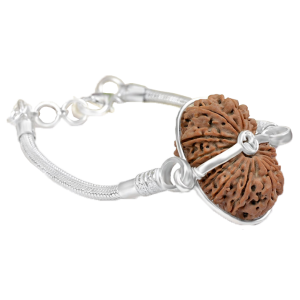 17 Mukhi Rudraksha Nepal Silver Bracelet in Snake Silver Chain Small 27mm
