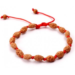 2 Mukhi Rudraksha Moon Bracelet  Java in Silk Thread