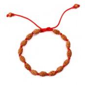 2 Mukhi Rudraksha Moon Bracelet  Java in Silk Thread