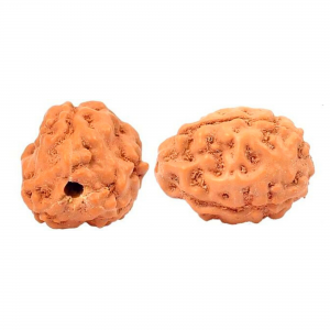 3 Mukhi Rudraksha from Indonesia/Java - Small 10mm