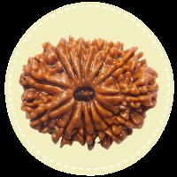 14 Mukhi Nepal Rudraksha
