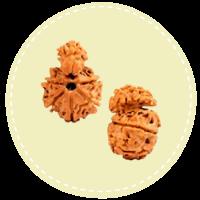 Savar Naag Rudraksha